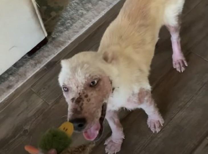 Yukon, il cucciolo rinato dopo essere stato tolto dalla strada (VIDEO)