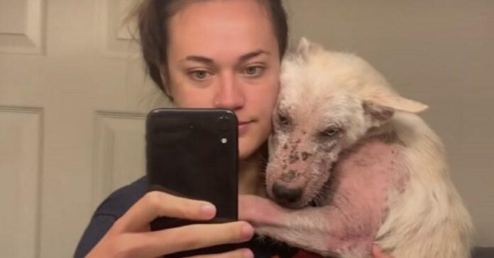 yukon cane rinato dopo essere stato tolto strada