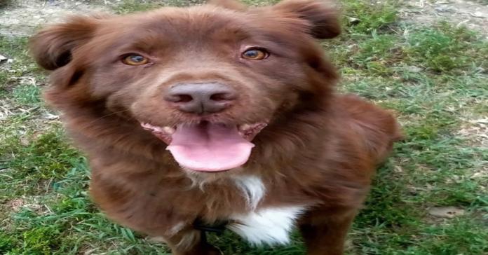 Jack cane da adottare