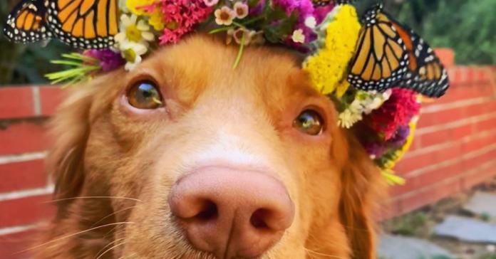 Milo cane amico delle farfalle