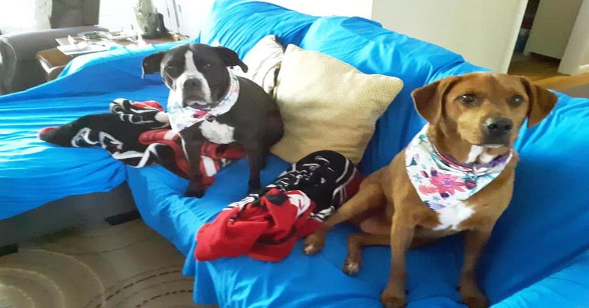 Kala e Keira: le due cucciole di cane salvate da un abbraccio (VIDEO)