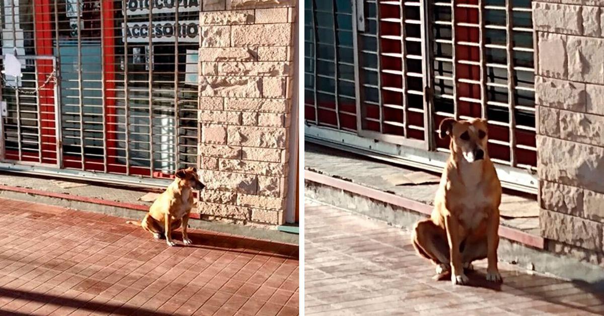 Bianca, la cucciola di cane che aspetta pazientemente la sua padrona scomparsa  (VIDEO)
