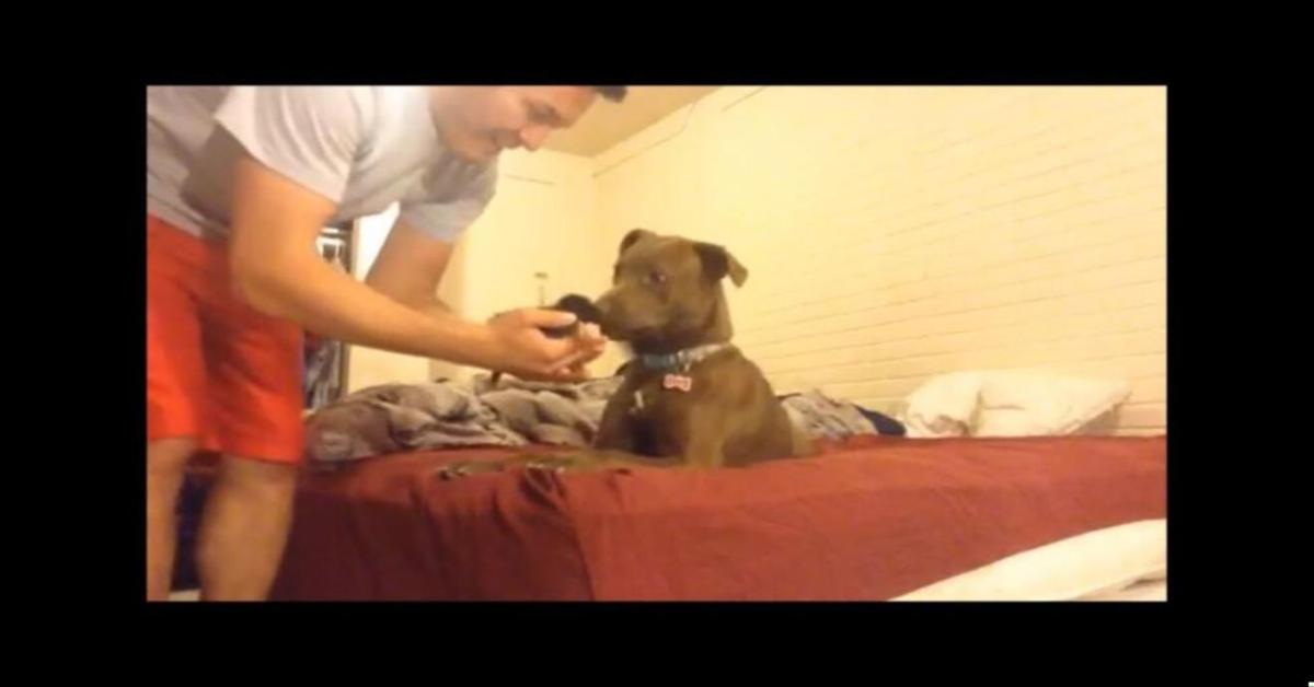 pitbull conosce gattino