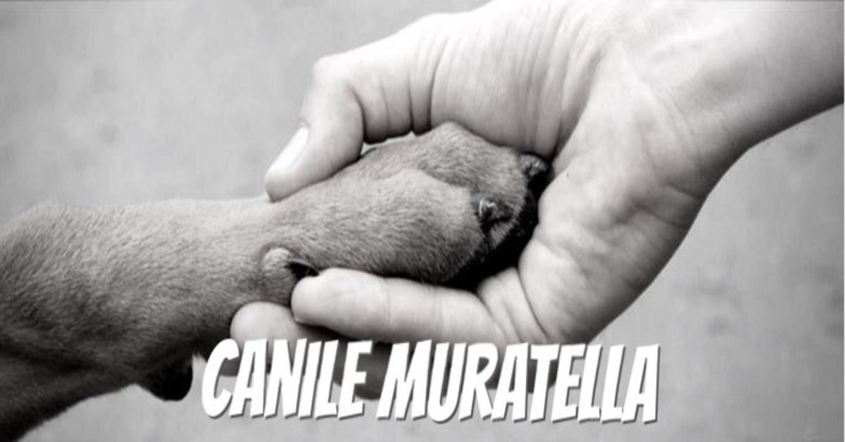 Canili di Roma: una bellissima cucciola in adozione