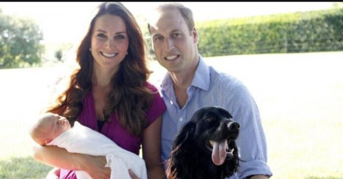 Cane di William e Kate