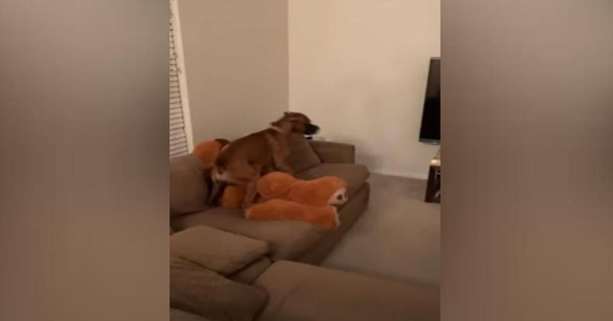 cane gioca con padrona travestita
