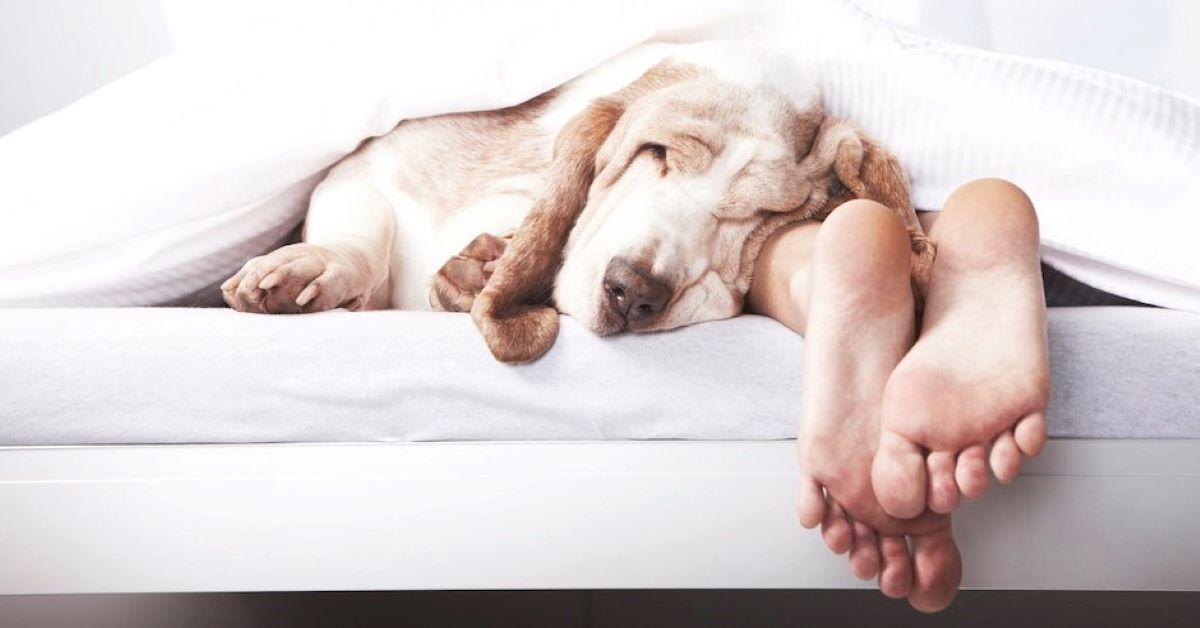 cagnolino vuole dormire con il padrone