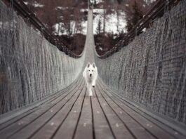 cane su ponte