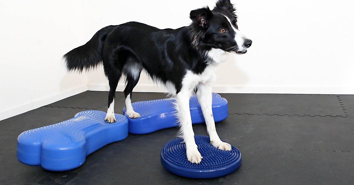 cane in equilibrio su strumenti propriocettivi