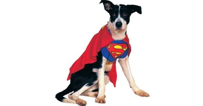 cane vestito da superman