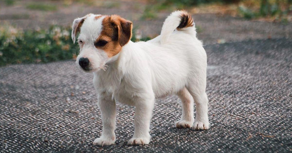 cucciolo in cortile