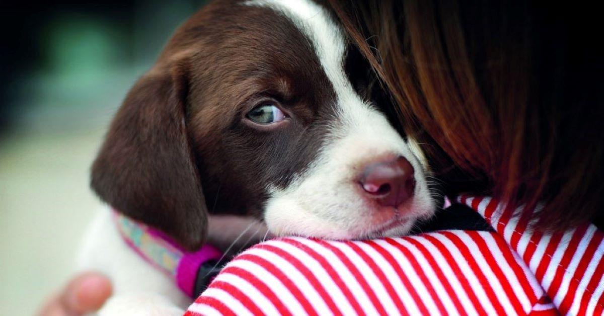 cucciolo di cane fa pipi per la paura