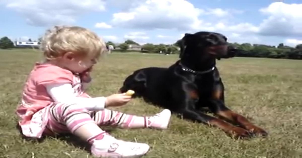 Un dolcissimo Doberman protegge la sorellina al parco (VIDEO)