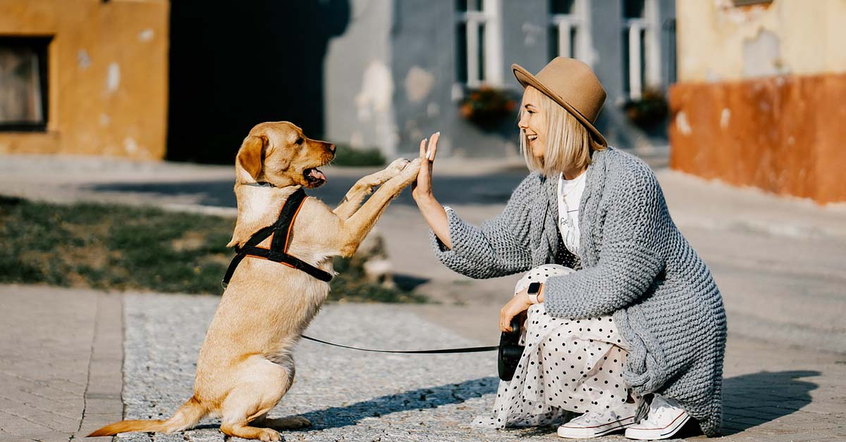 adottare un cane, come fare?