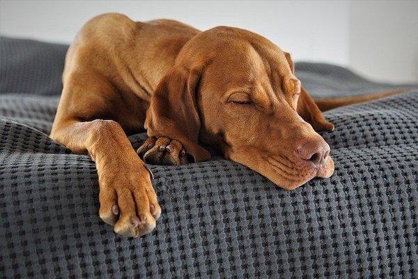 Cani, dove adottarli in Lombardia: piccola guida