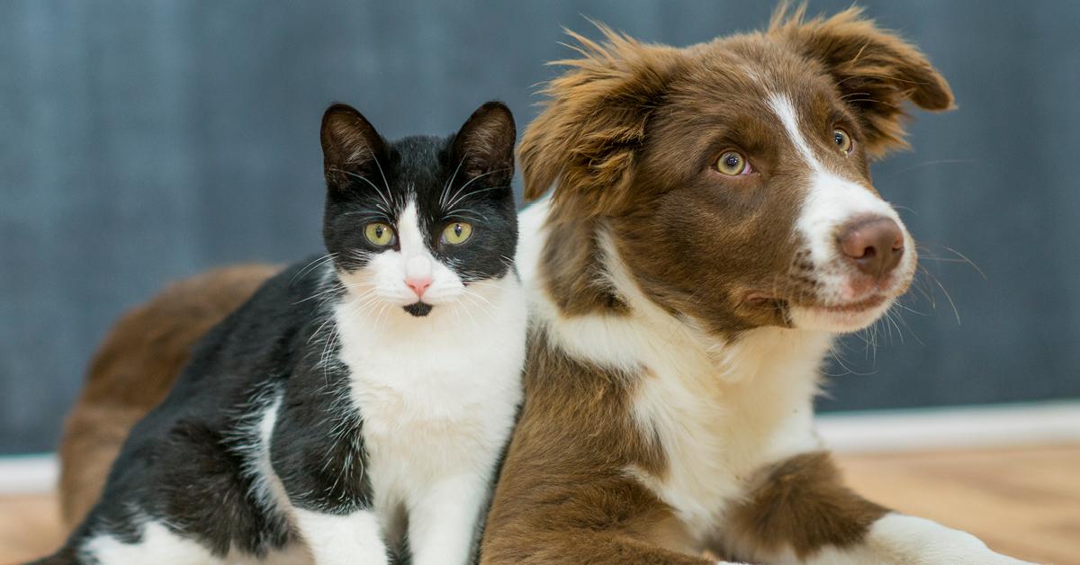 I cani sono più intelligenti dei gatti? O è il contrario?