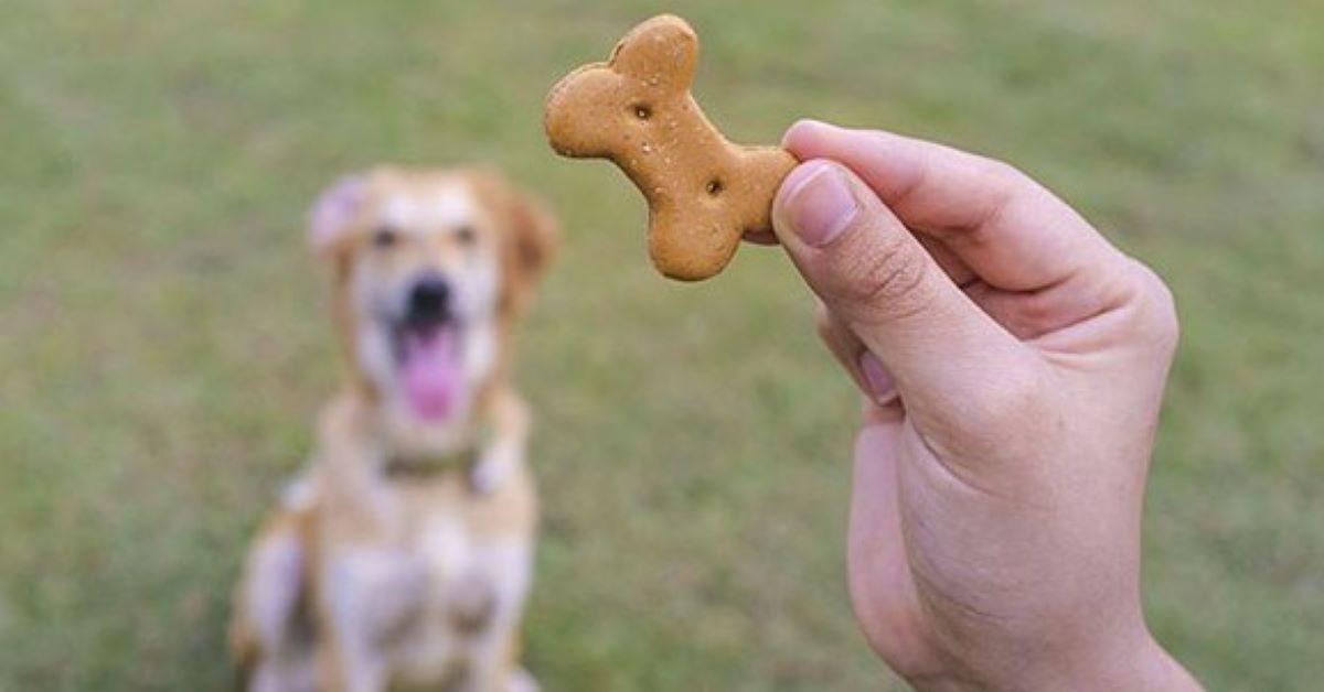 ricompensa al cagnolino impaurito