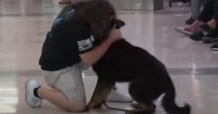 Cane che ritrova il proprietario
