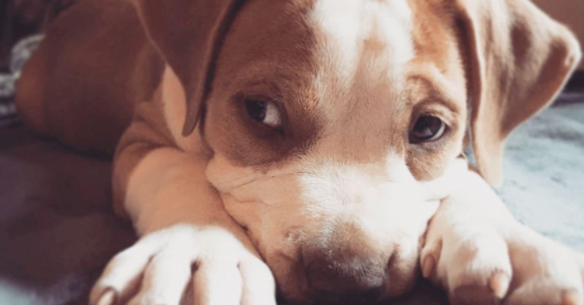 cane guarda con la coda dell'occhio