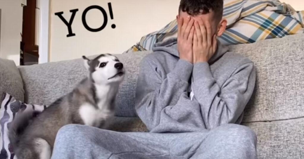 Il cucciolo di Husky cerca di consolare il suo proprietario che piange (video)