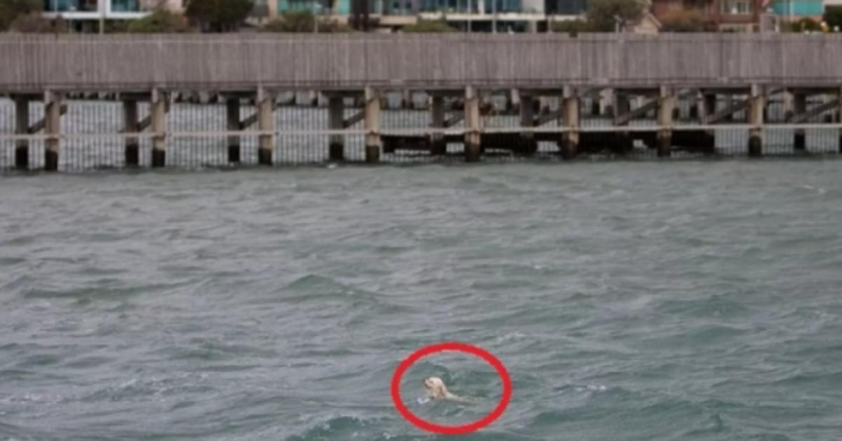 cagnolina in mare