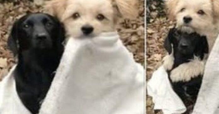 cucciolo di cane abbraccia il suo amico video