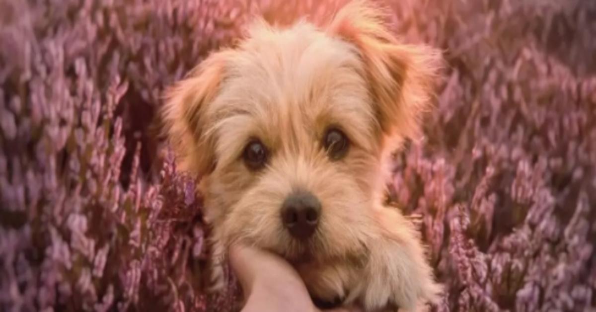 Knut, il cucciolo di cane che abbraccia il suo amico durante una sessione fotografica (VIDEO)