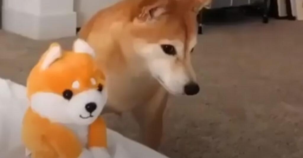 """Lo Shiba Inu è spaventato da una versione giocattolo di """"se stesso"""" (video)"""