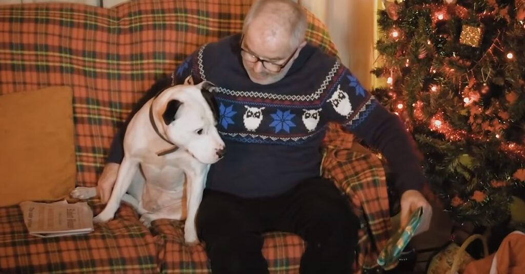 Pitbull con il proprietario
