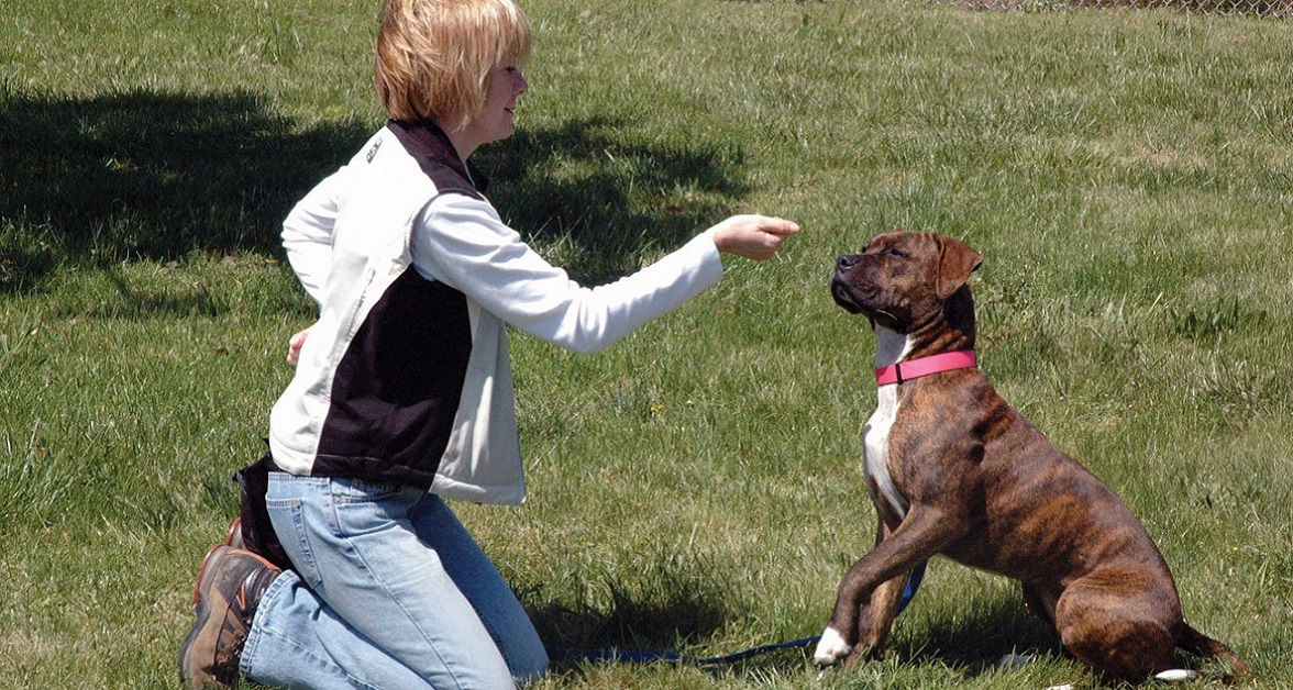 addestramento luring cane