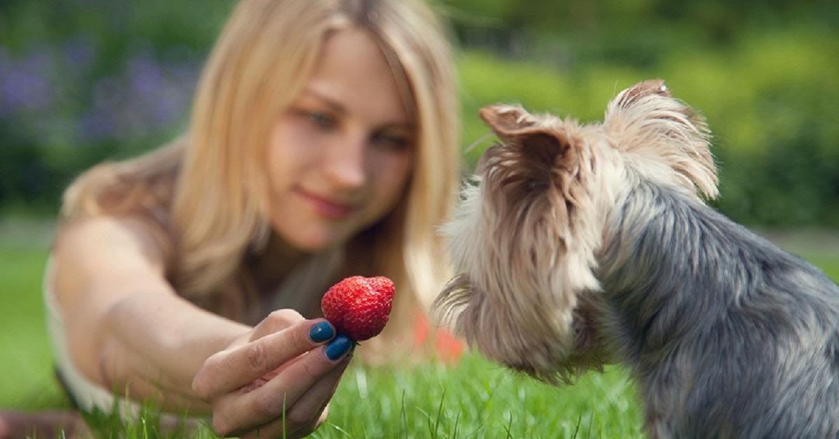 ragazza dà fragola a cane