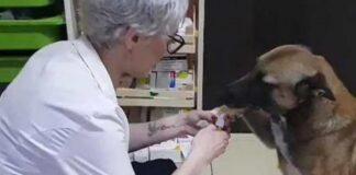 Cucciolo di cane randagio che va in farmacia