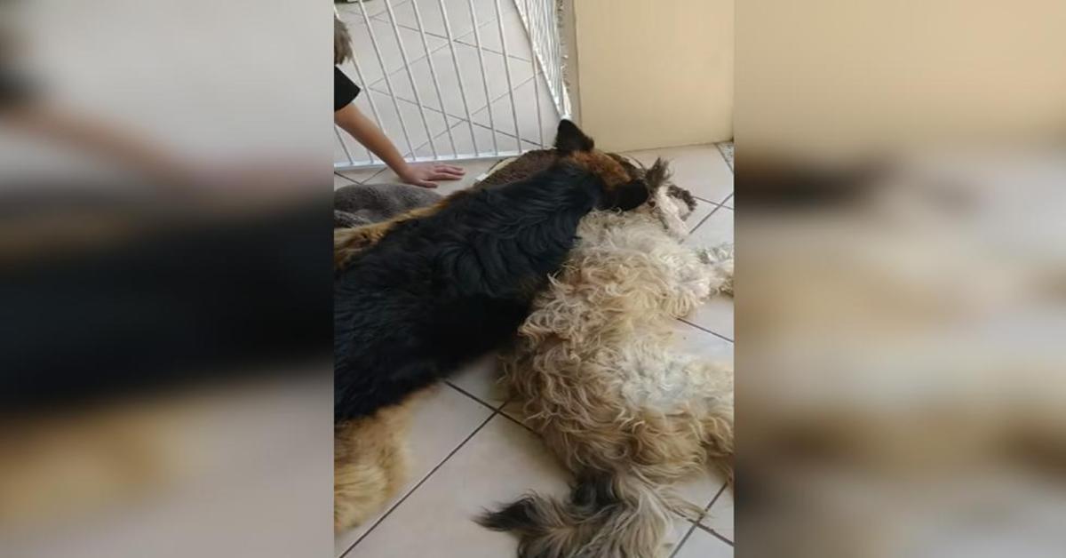 cane disperato perchè pensa che l'amico sia morto