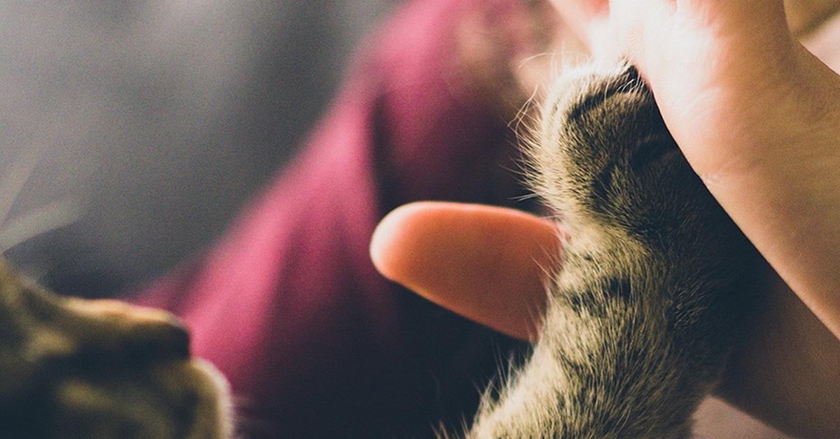 tocco con zampa di cane o gatto