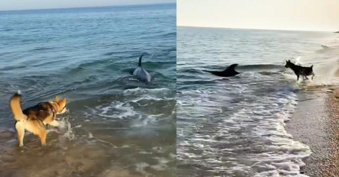 cane e delfino giocano