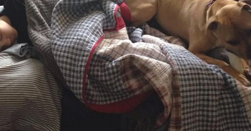 Pitbull dorme con un ragazzo