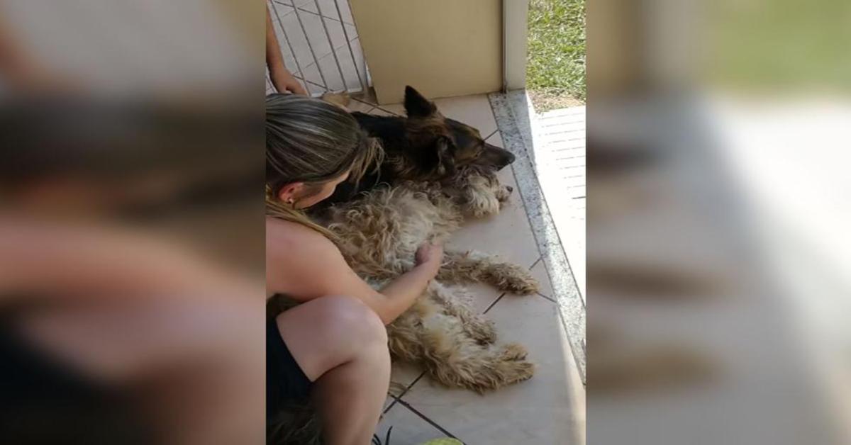 cane disperato crede che l'amico sia morto