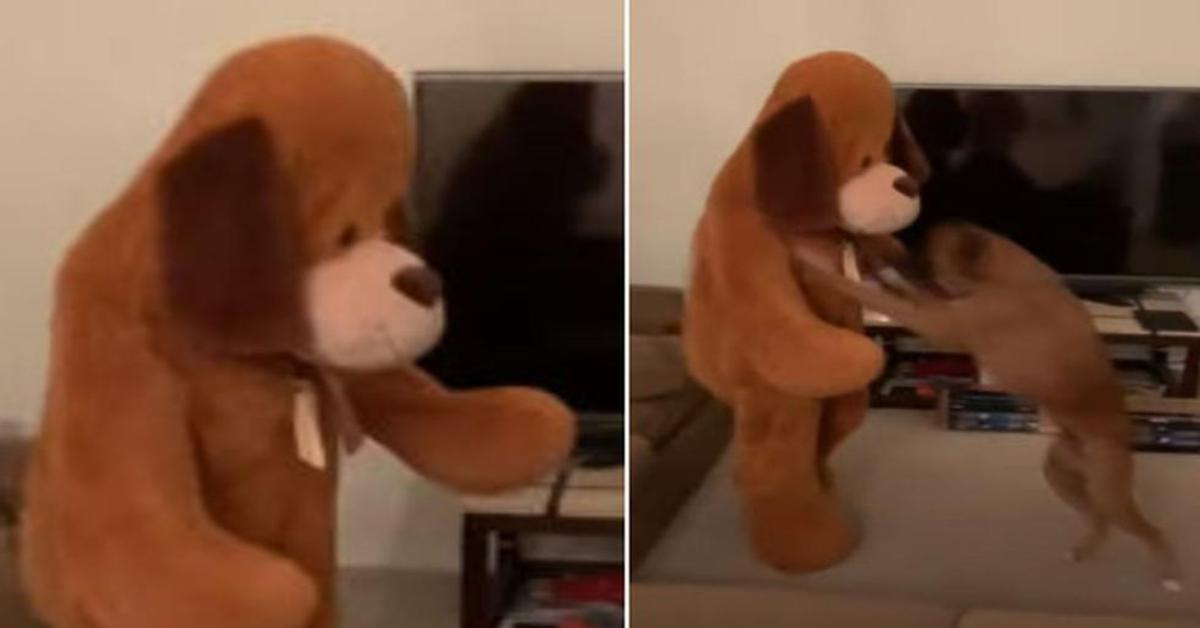 La reazione gioiosa di un cucciolo di Boxer quando vede la padrona travestita da cane gigante (VIDEO)
