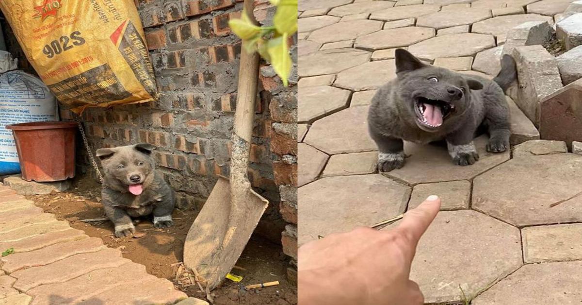 Il cucciolo Dúi, che sorprende tutti per la sua somiglianza con un gatto (VIDEO)