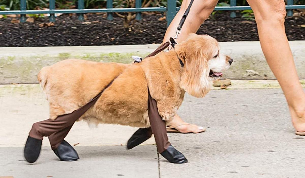 Accessori invernali per il cane: quali sono quelli che Fido deve assolutamente avere?
