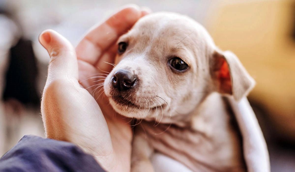 adottare un cucciolo di cane