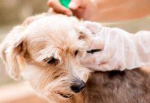 mettere l'antipulci al cane