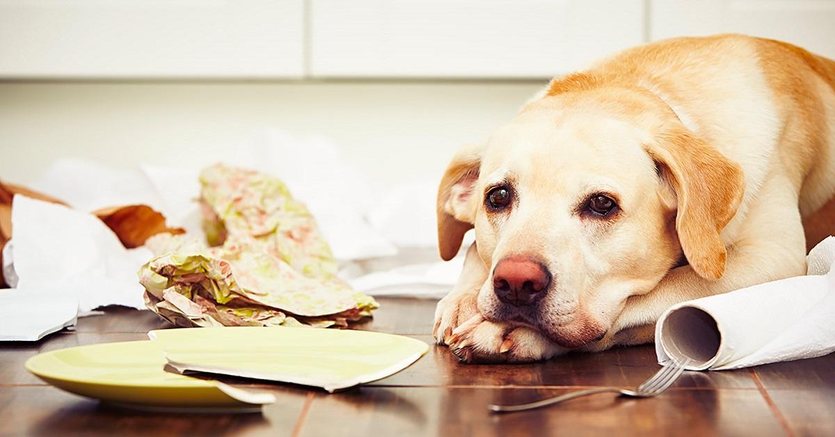 cane distruttivo