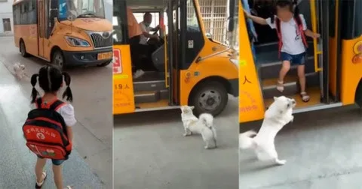 Adorabile cucciolo di cane accompagna tutti i giorni la sua padroncina a prendere l'autobus (VIDEO)