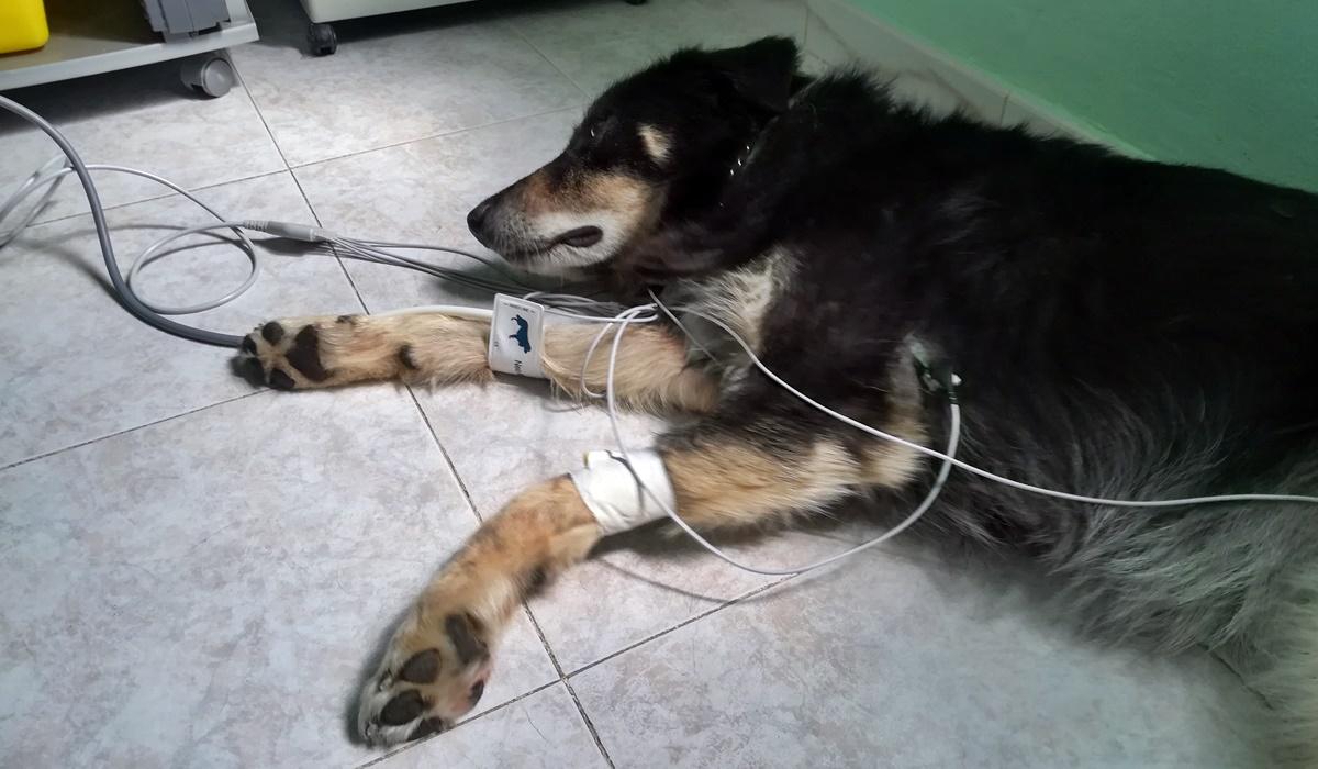 Avvelenamento da stricnina nel cane: come riconoscerlo e agire tempestivamente