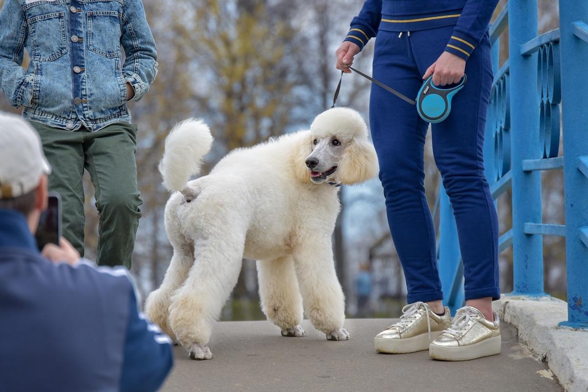 barbone fa una passeggiata