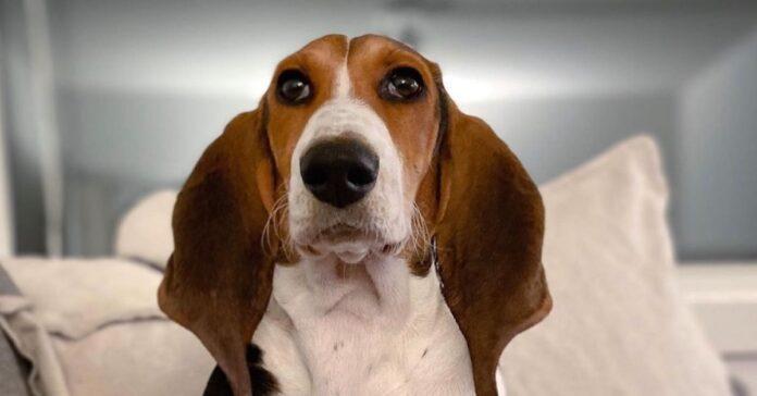 cane sguardo simpatico