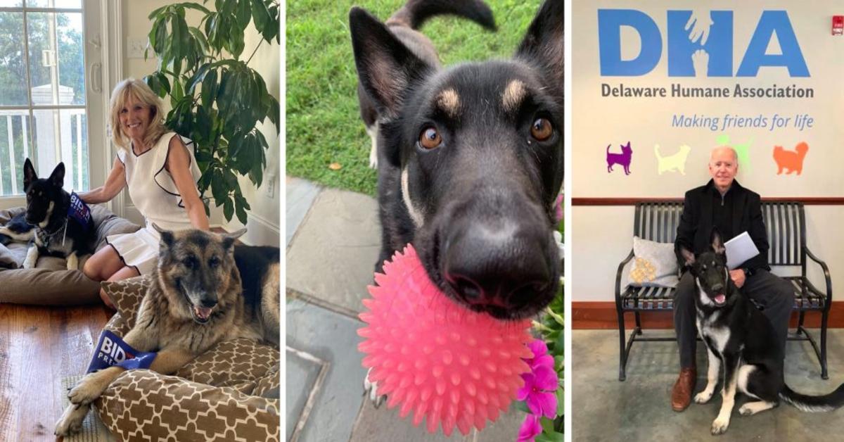 Major cane adottato da Biden