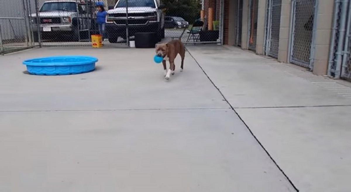 blue cane ricerche disperate papà