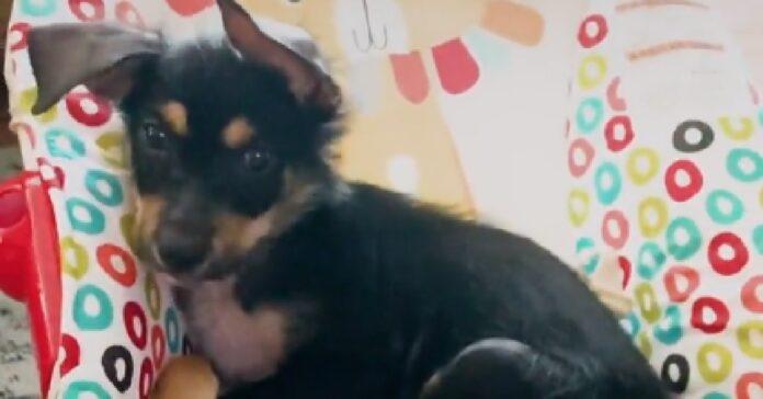 boone timido cucciolo salvato strada